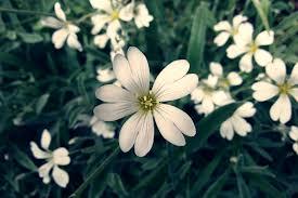 coronas de flores para Tanatorio de Campo Real