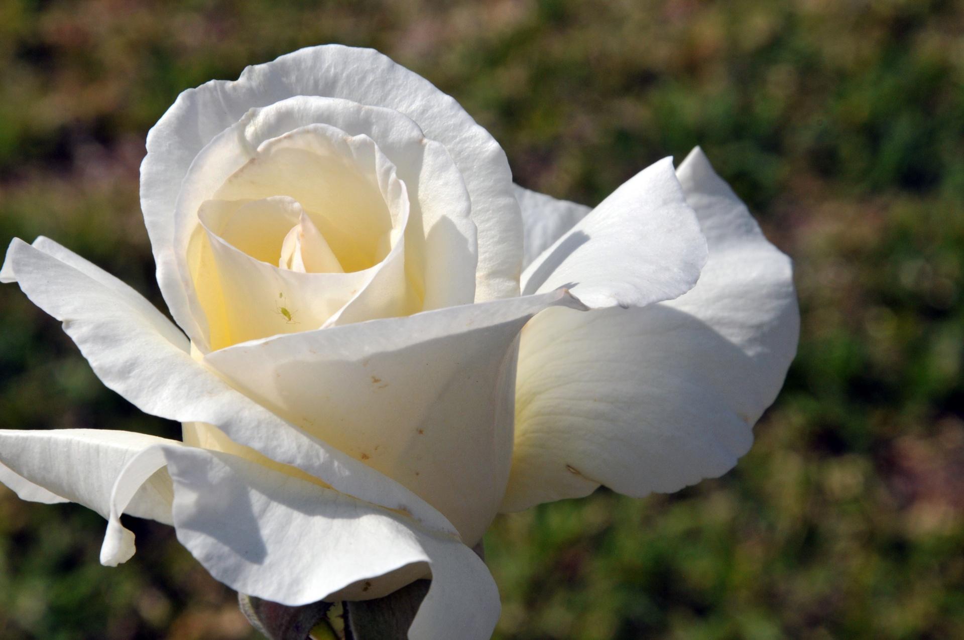 coronas de flores para Tanatorio de Nuestra Señora de Butarque