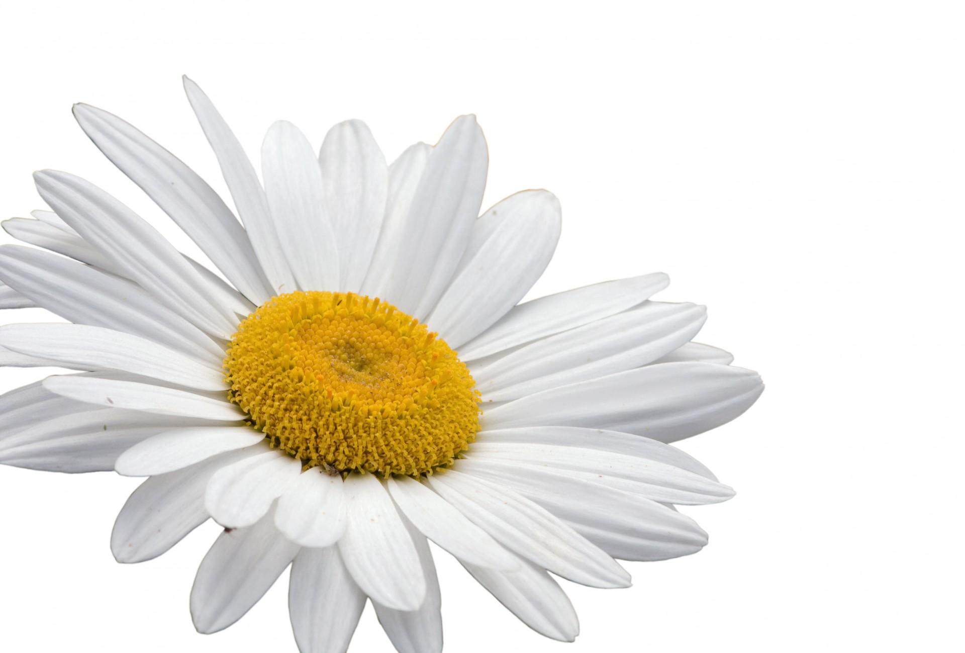 coronas de flores para Tanatorio Galapagar