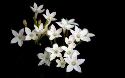 Historia y valor de las flores en Tanatorio Coslada
