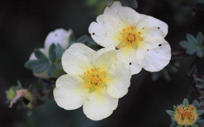 Historia  de las coronas de flores en Tanatorio Leganés