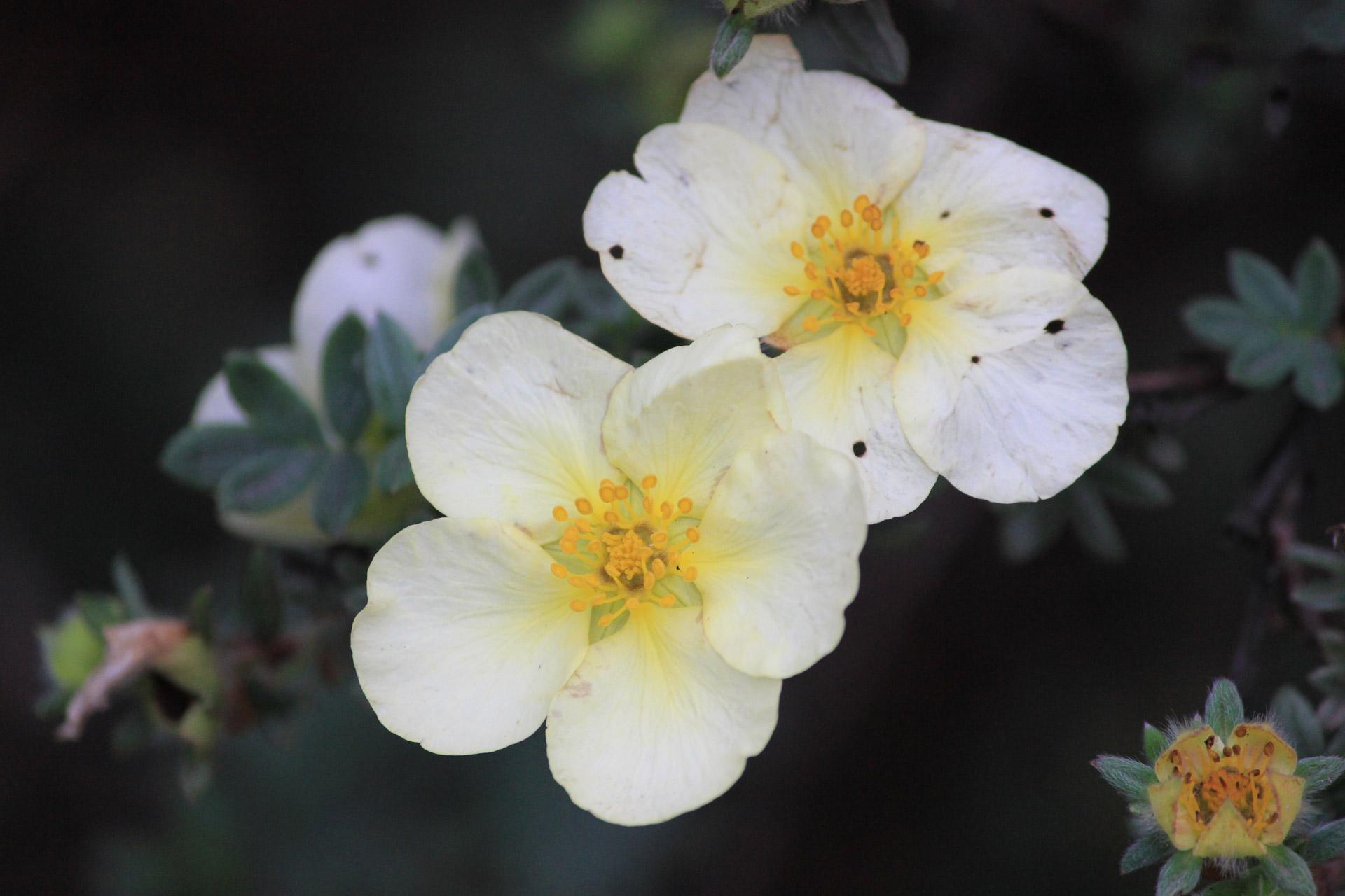 coronas de flores para Tanatorio Leganés
