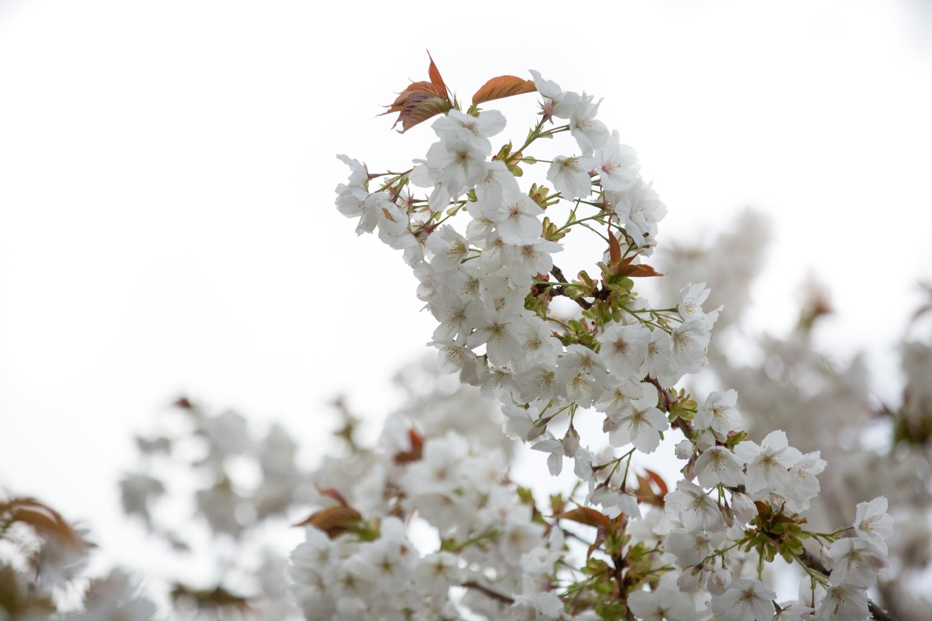 coronas de flores para Tanatorio de Velilla de San Antonio