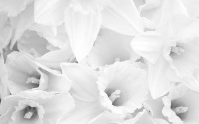 Crónica  de las coronas de flores para difuntos en Tanatorio Móstoles