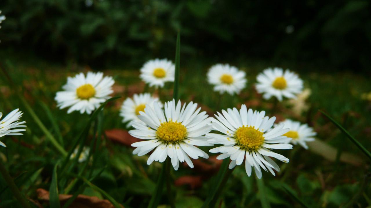 coronas de flores para Tanatorio de Guadarrama