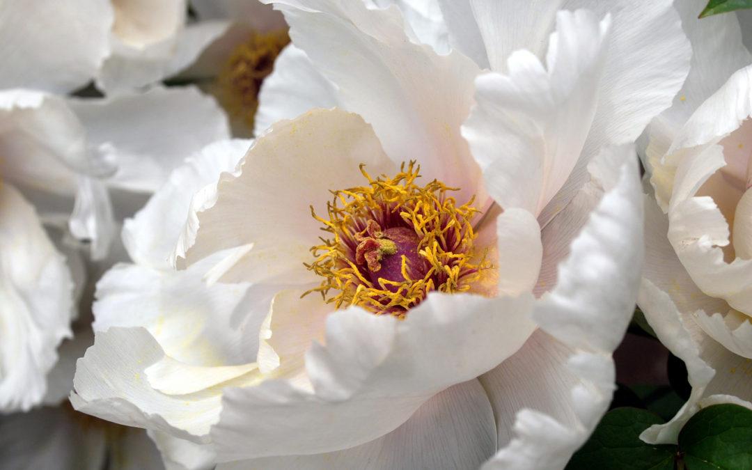 Leyenda  de las flores para difuntos en Tanatorio de Valdemanco