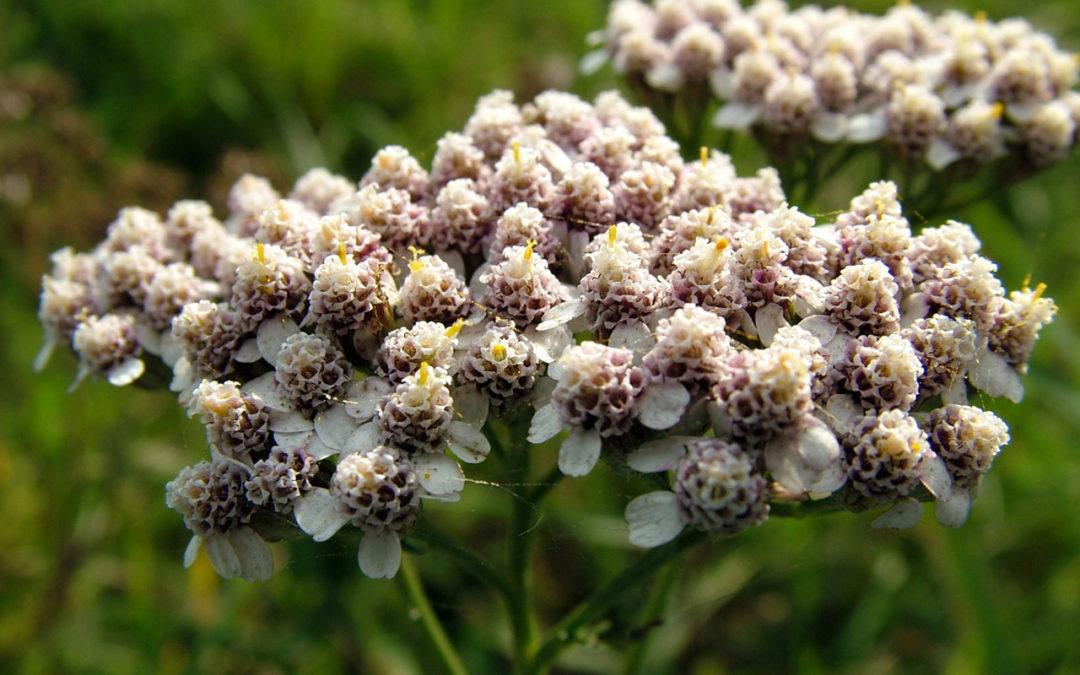 Historia y valor de las composiciones florales para difuntos en Tanatorio de Cercedilla