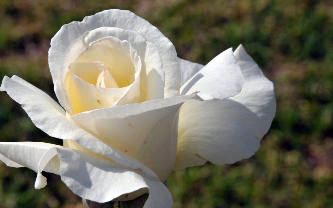 Historia y valor de las flores en funerales en Tanatorio de Nuestra Señora de Butarque