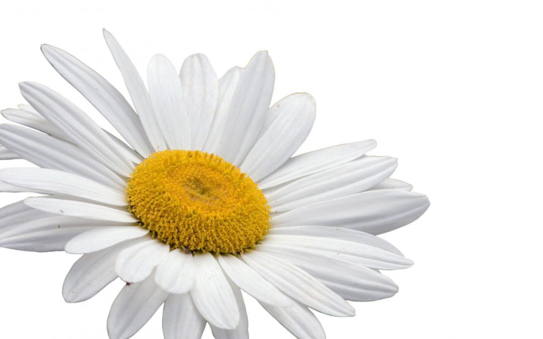 Crónica  de las coronas de flores para difuntos en Tanatorio Galapagar