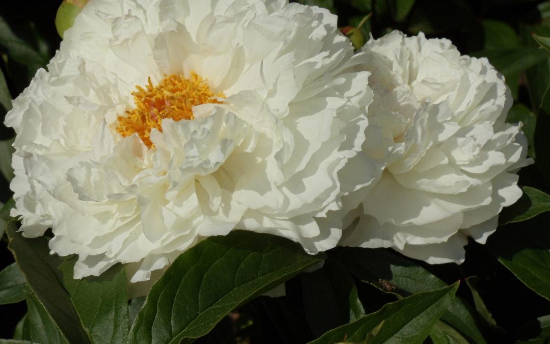Crónica y valor de las flores en Tanatorio M30