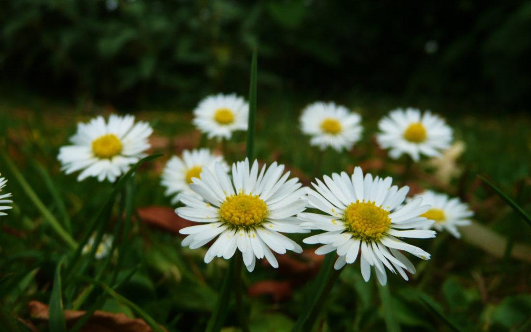 Historia  de las flores en funerales en Tanatorio de Guadarrama