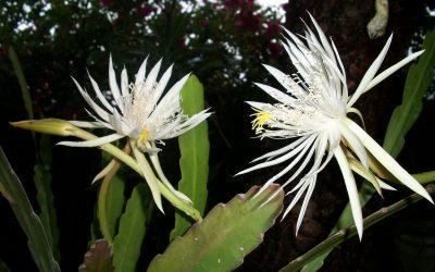 Crónica  de las composiciones florales para difuntos en Tanatorio M40