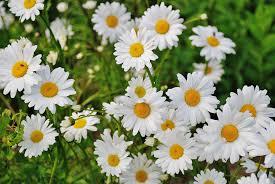 Cronología y valor de las composiciones florales para difuntos en Tanatorio Pozuelo De Alarcón