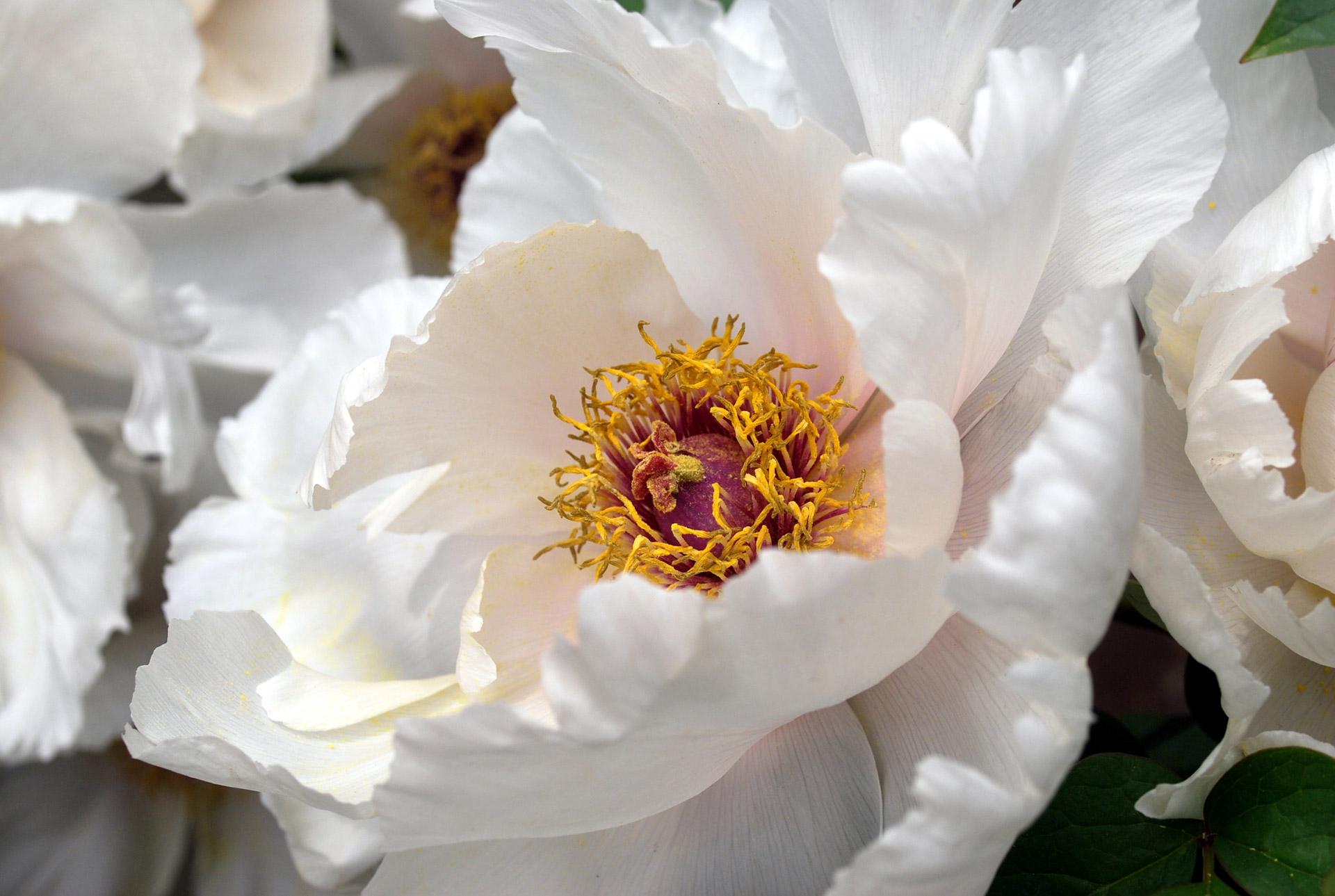 coronas de flores para Tanatorio de Torrelaguna