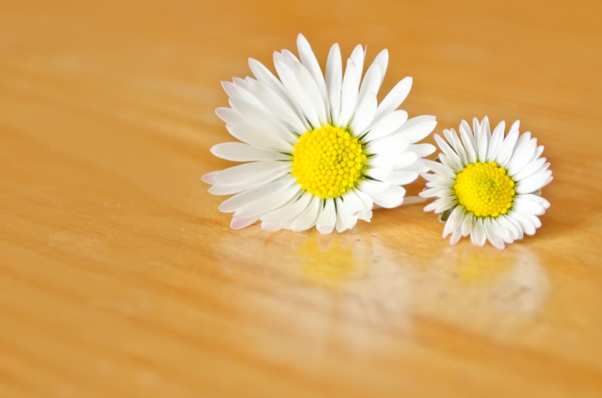 coronas de flores para Tanatorio de Miraflores de La Sierra