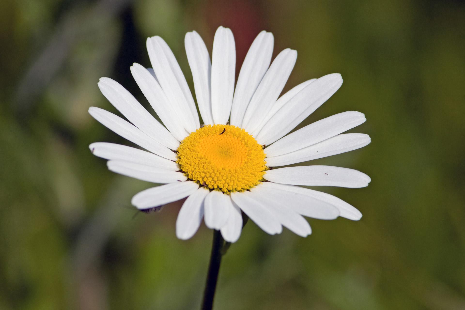 coronas de flores para Tanatorio Getafe