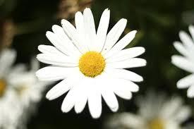 Leyenda  de las flores para difuntos en Tanatorio Valdemoro