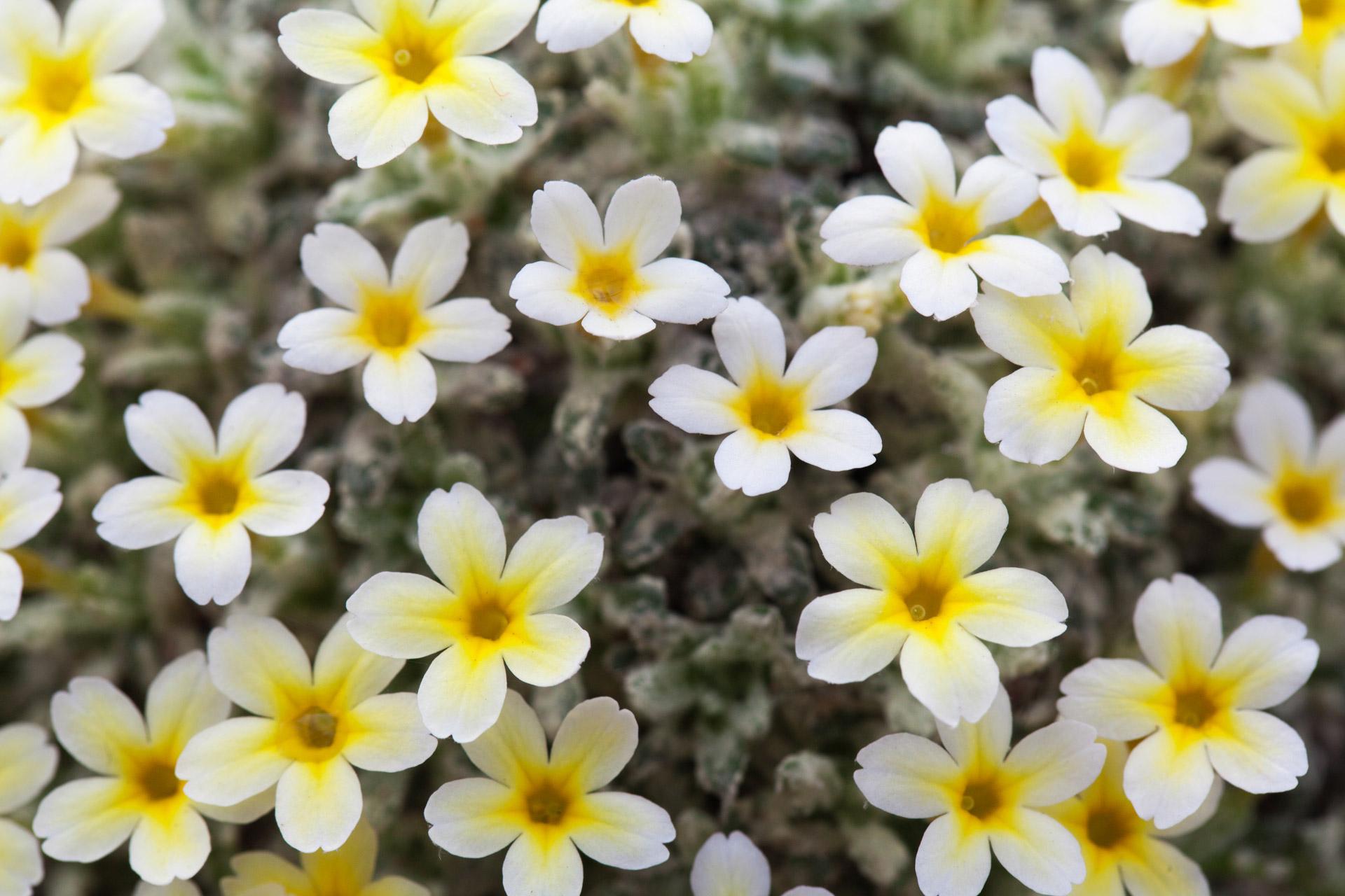 coronas de flores para Tanatorio de Daganzo