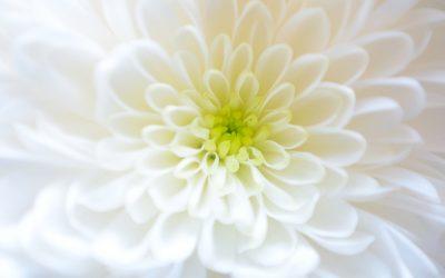 Crónica y valor de las flores para difuntos en Tanatorio Pinto