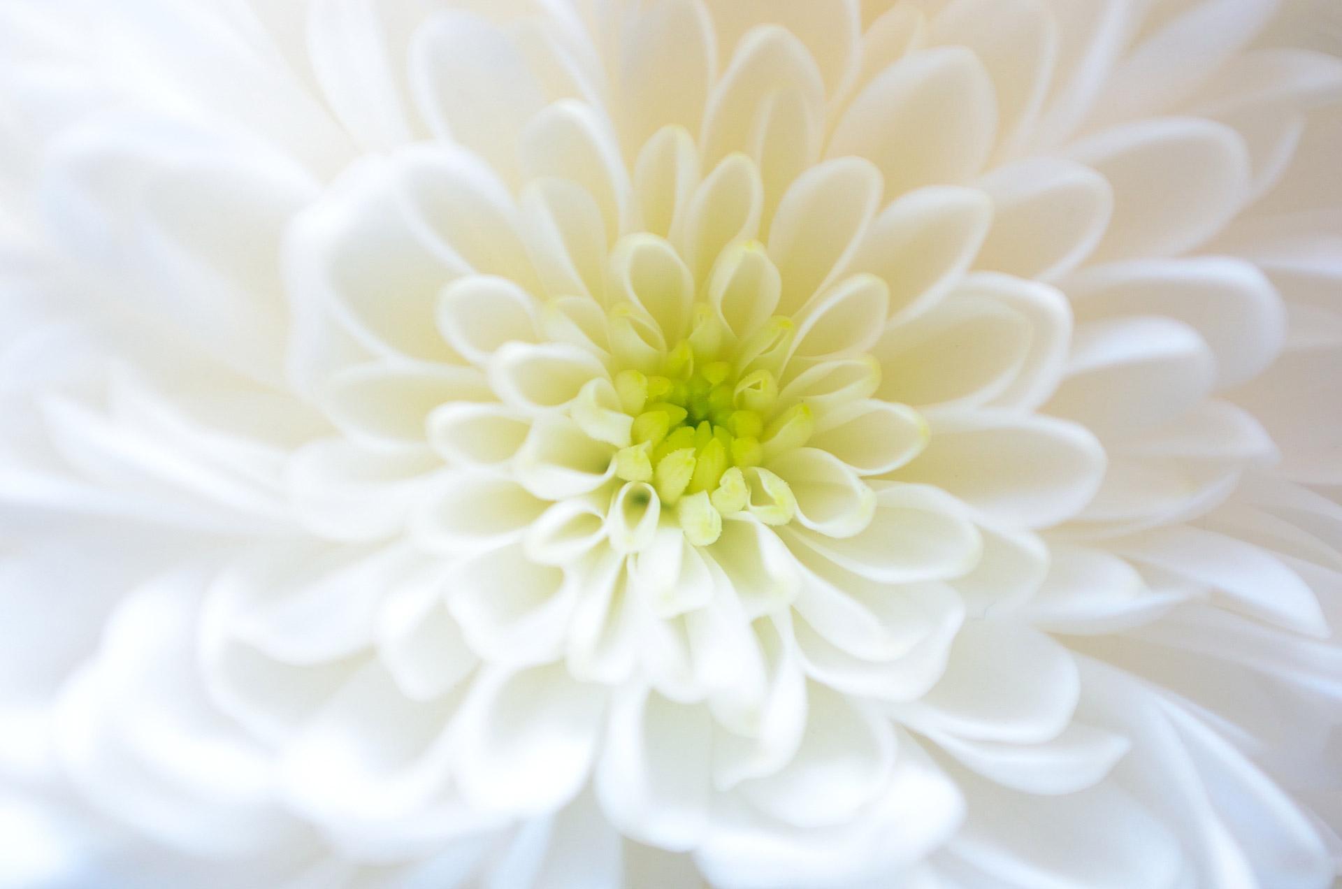 coronas de flores para Tanatorio Pinto