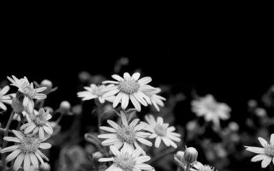 Crónica  de las flores en funerales en Tanatorio San Martín De La Vega