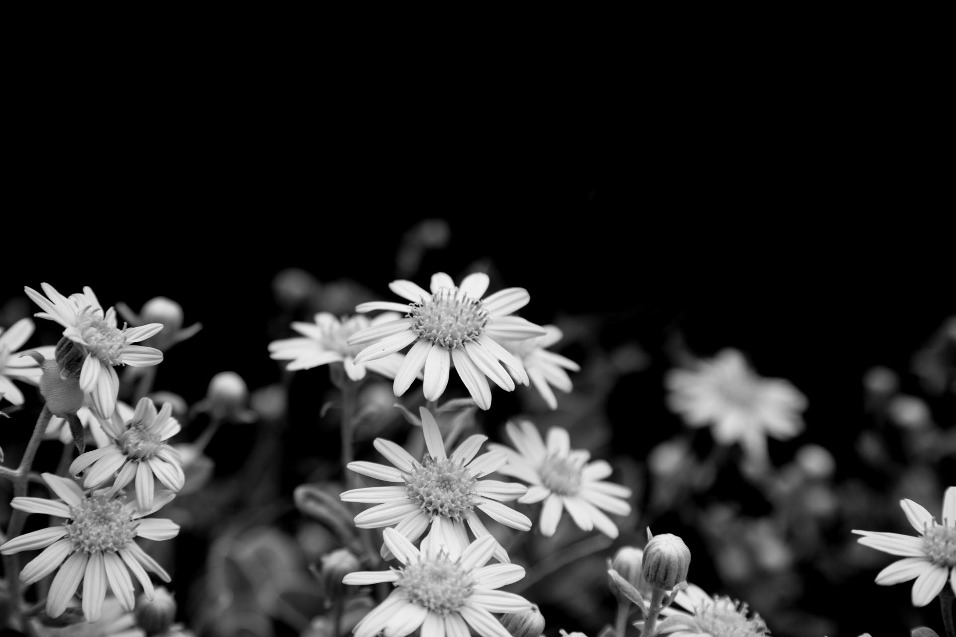 coronas de flores para Tanatorio San Martín De La Vega