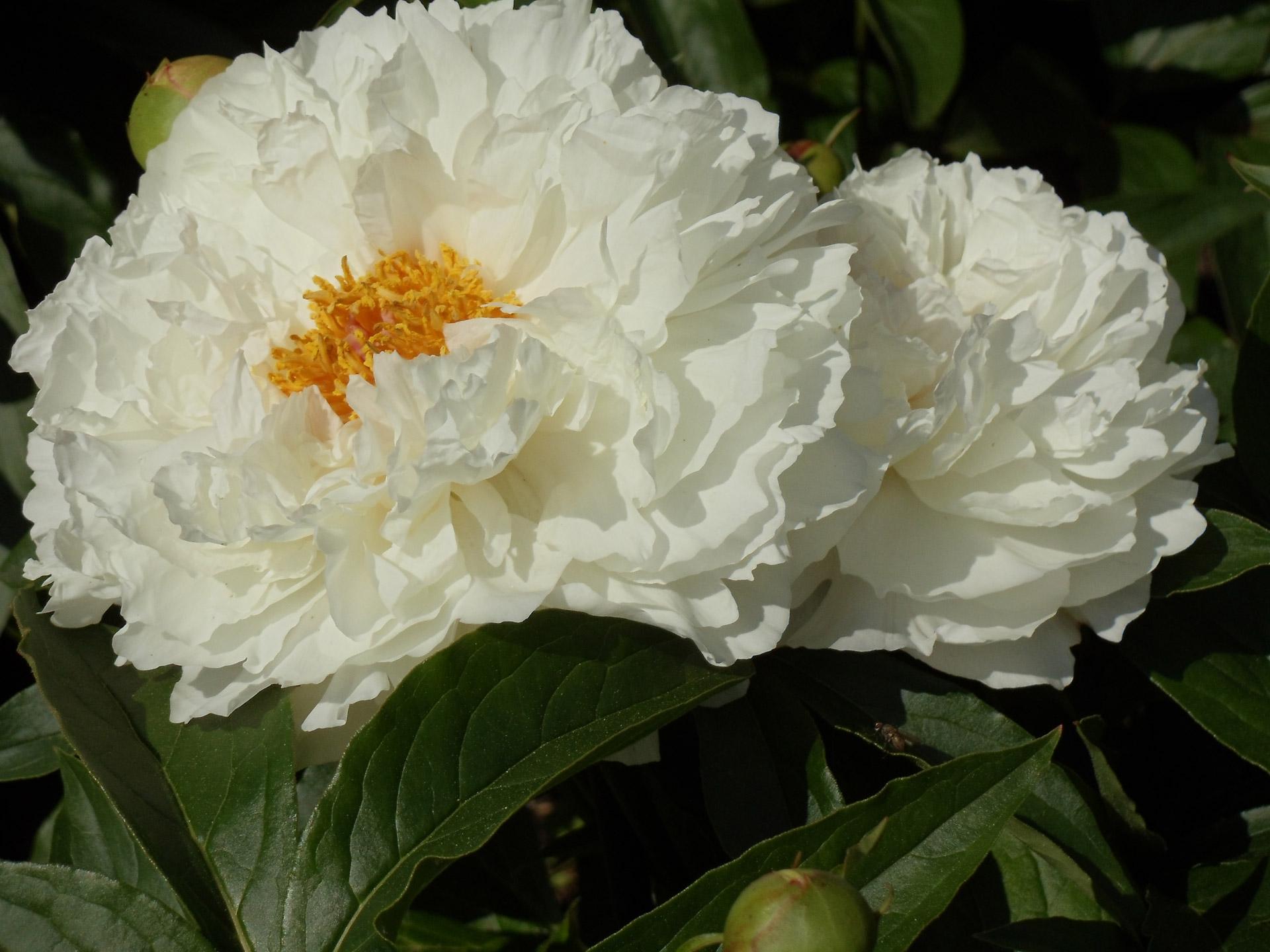 coronas de flores para Tanatorio M30
