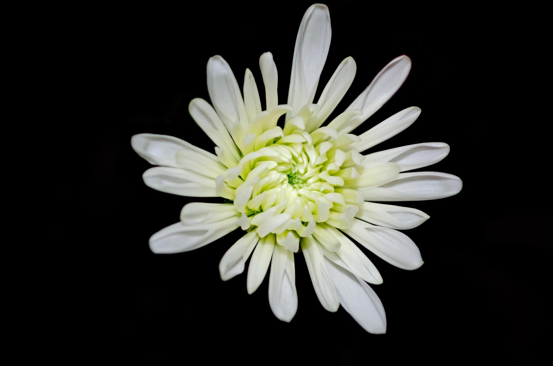 coronas de flores para Tanatorio de Manzanares El Real