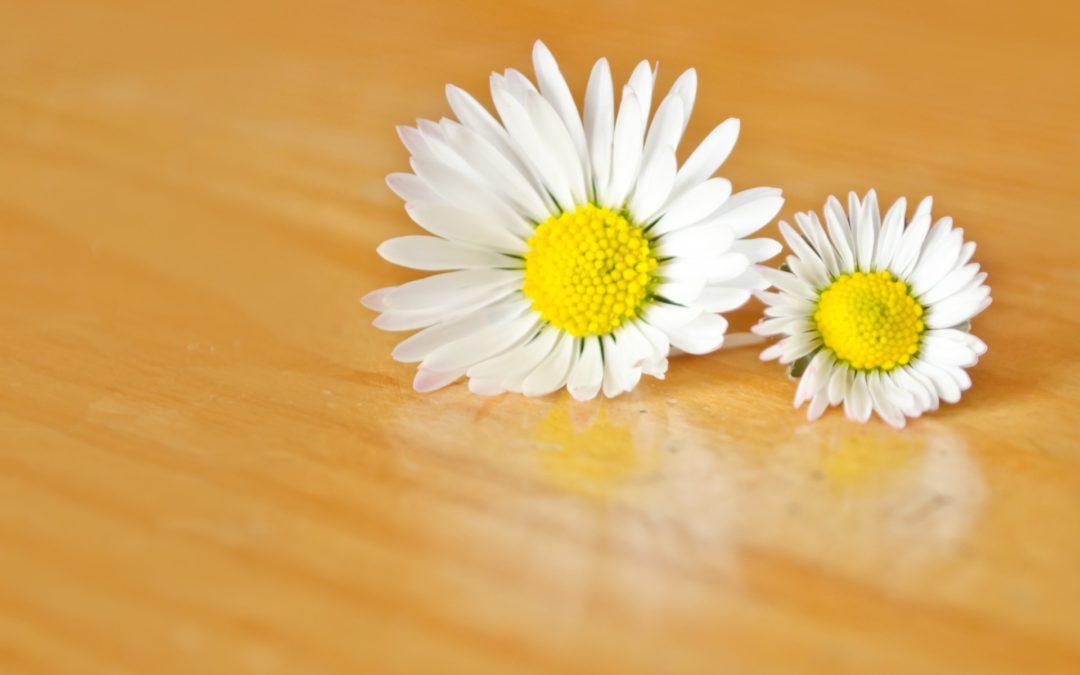 Leyenda y valor de las flores en funerales en Tanatorio de Miraflores de La Sierra