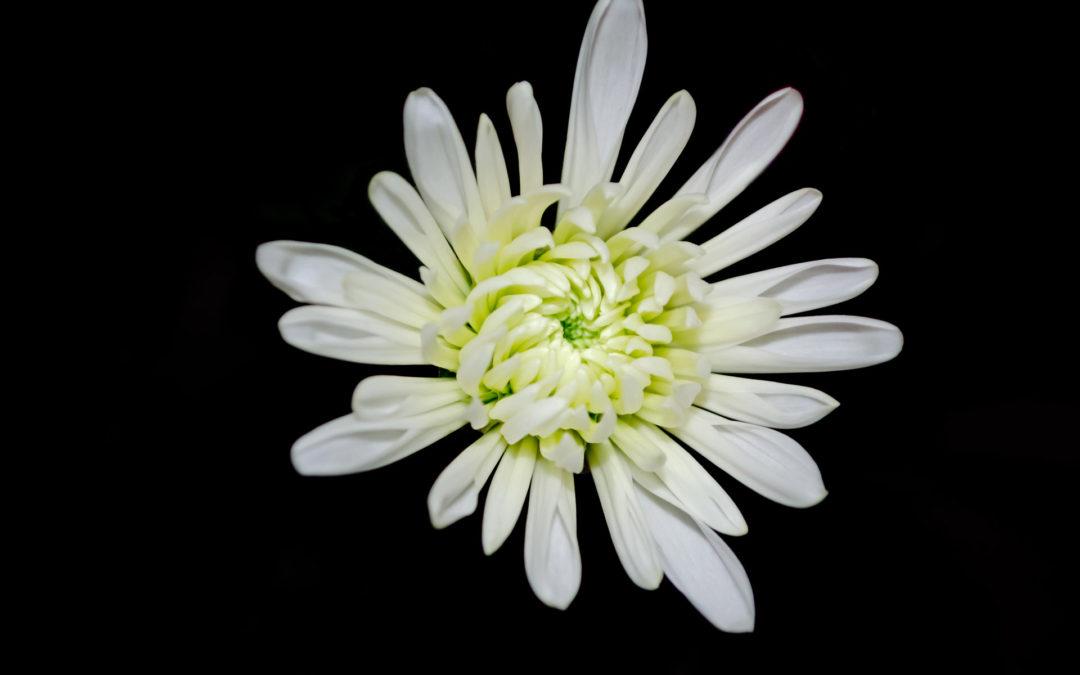 Leyenda  de las flores en Tanatorio de Manzanares El Real