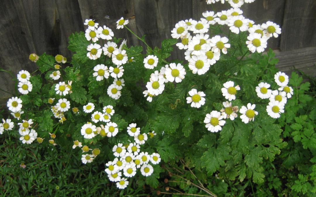 Leyenda y valor de las composiciones florales para difuntos en Tanatorio de Serranillos del Valle
