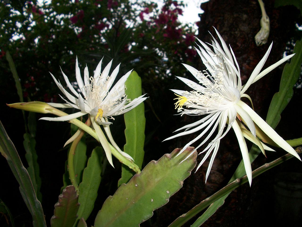 coronas de flores para Tanatorio M40