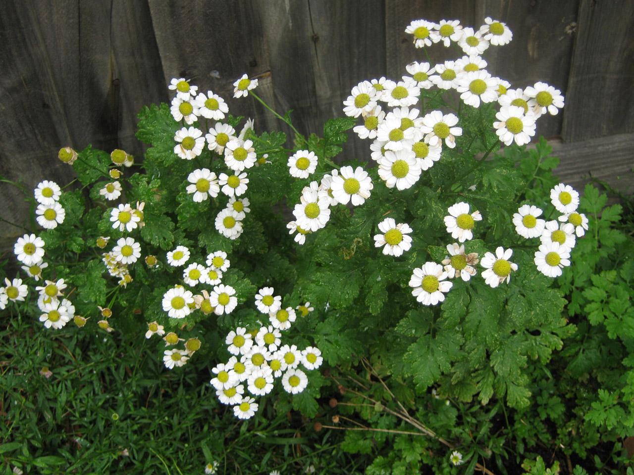 coronas de flores para Tanatorio de Serranillos del Valle